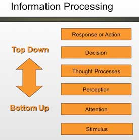 bottom up and top down processing psychology examples of dual relationship